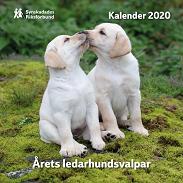 Kalender med ledarhundsvalpar